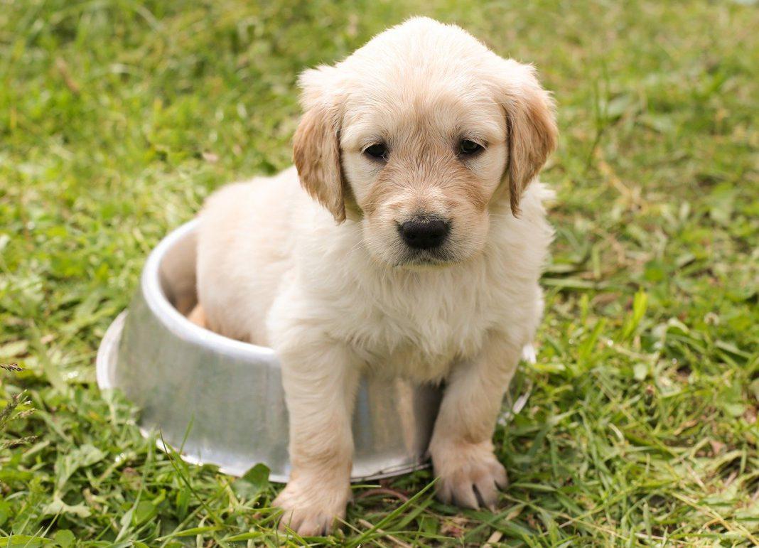 Come somministrare il cibo al tuo cane