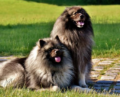 Cura del pelo del cane: quali prodotti usare