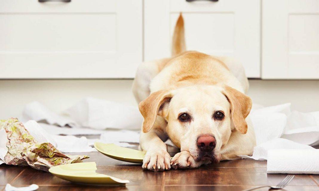 Abituare il cane a non mordere oggetti e mobili