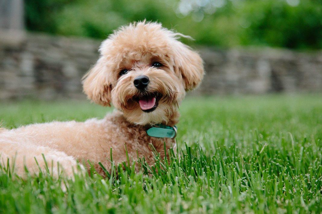 Come addestrare un cucciolo di cane