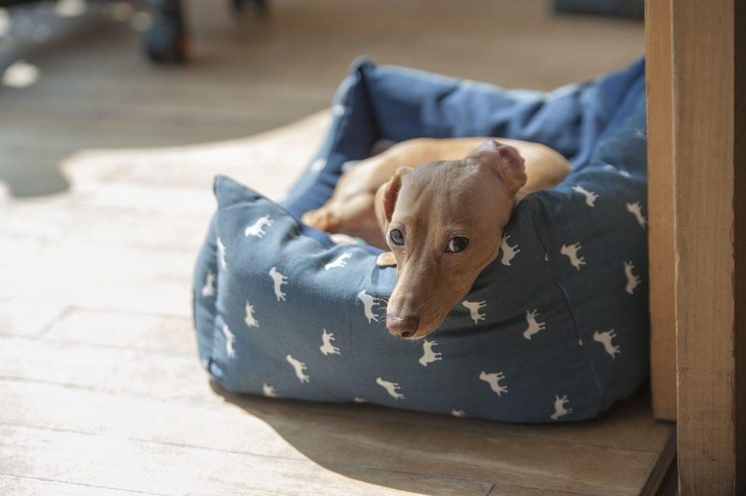 Cane da solo in casa: come non avere troppi disastri