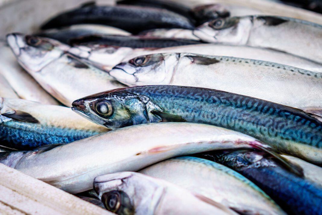 Le proteine del pesce: fondamentali per il benessere del cane