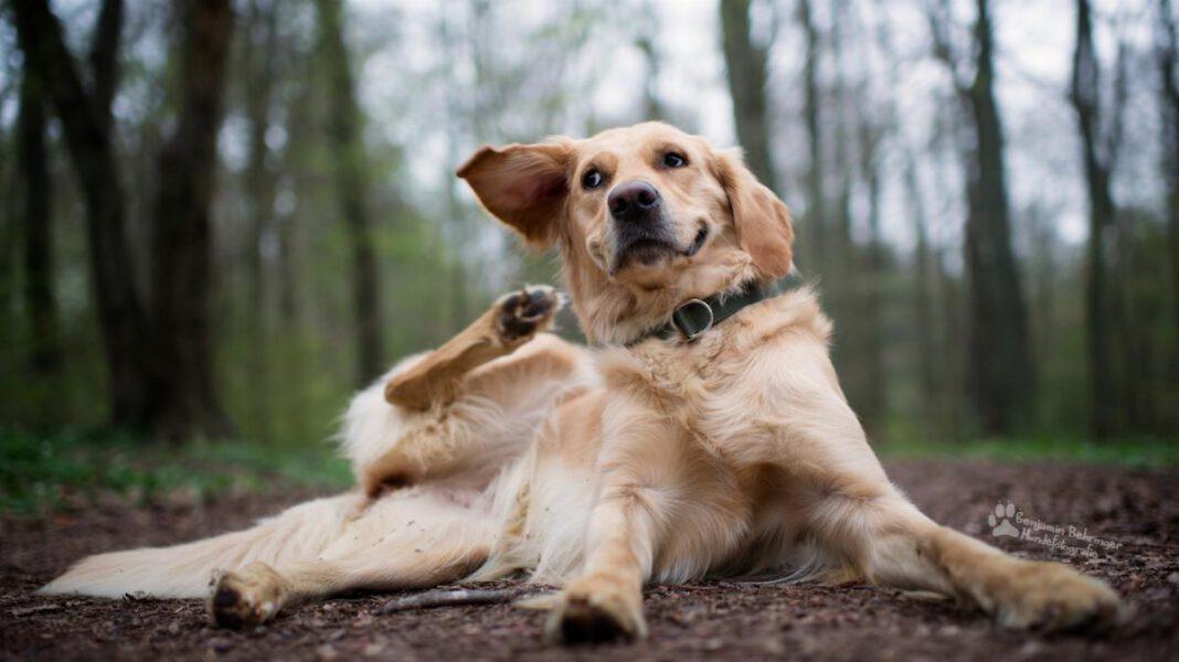 Antiparassitari per cani: necessari per proteggere i nostri amici pelosi